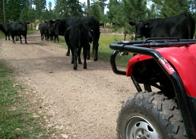 ATV Body Armour out in the pasture
